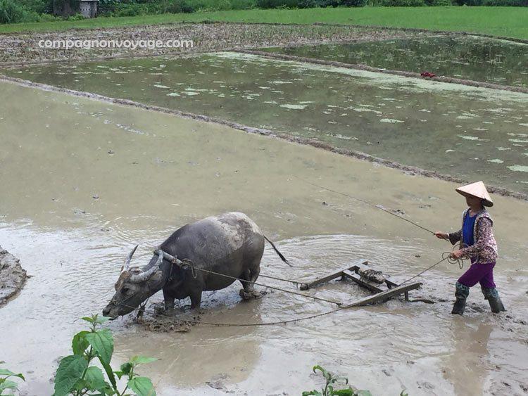 activité locale on voit pendant la randon à Puluong