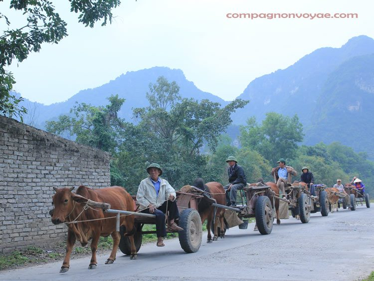 charette- moyen de transport typique au nord vietnam