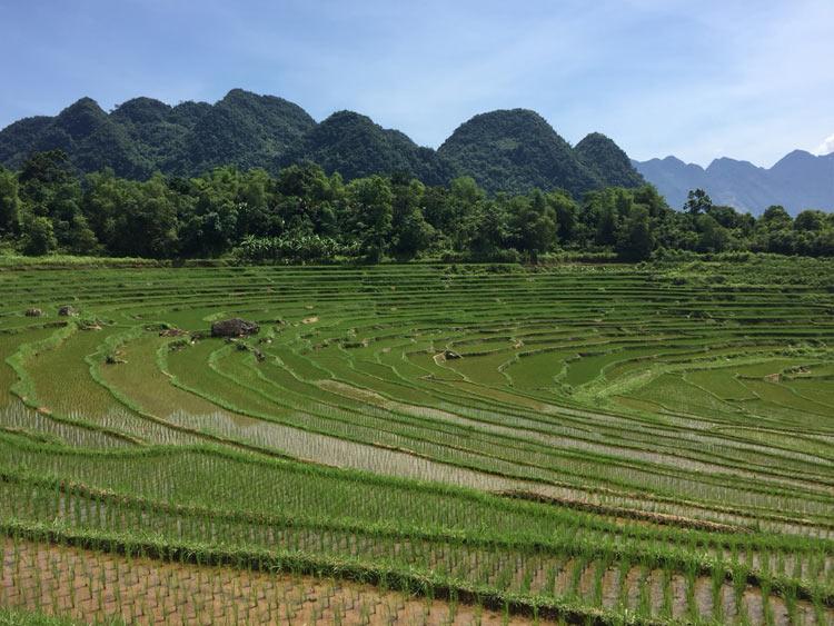 riziere-en-terrasse-a-Pu-Luong
