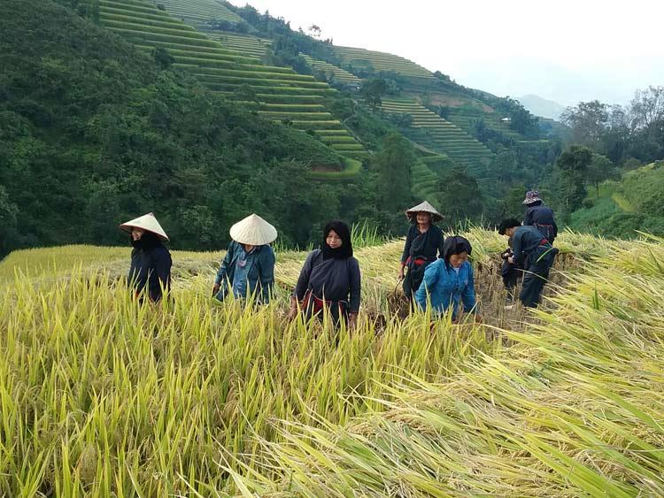 la-saison-du-riz