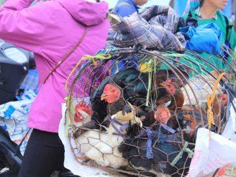 commerçant des volailles